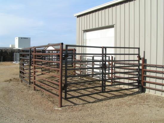 Where cattle exit the chute and enter the holding pens