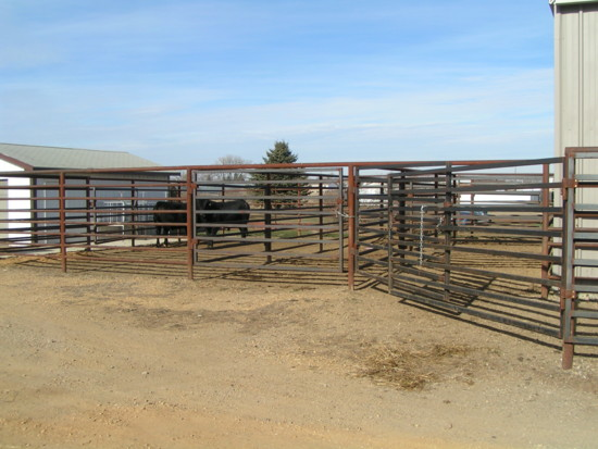 The cattle holding corrals